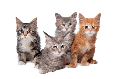 Cats_four