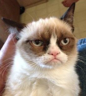 upset_cat